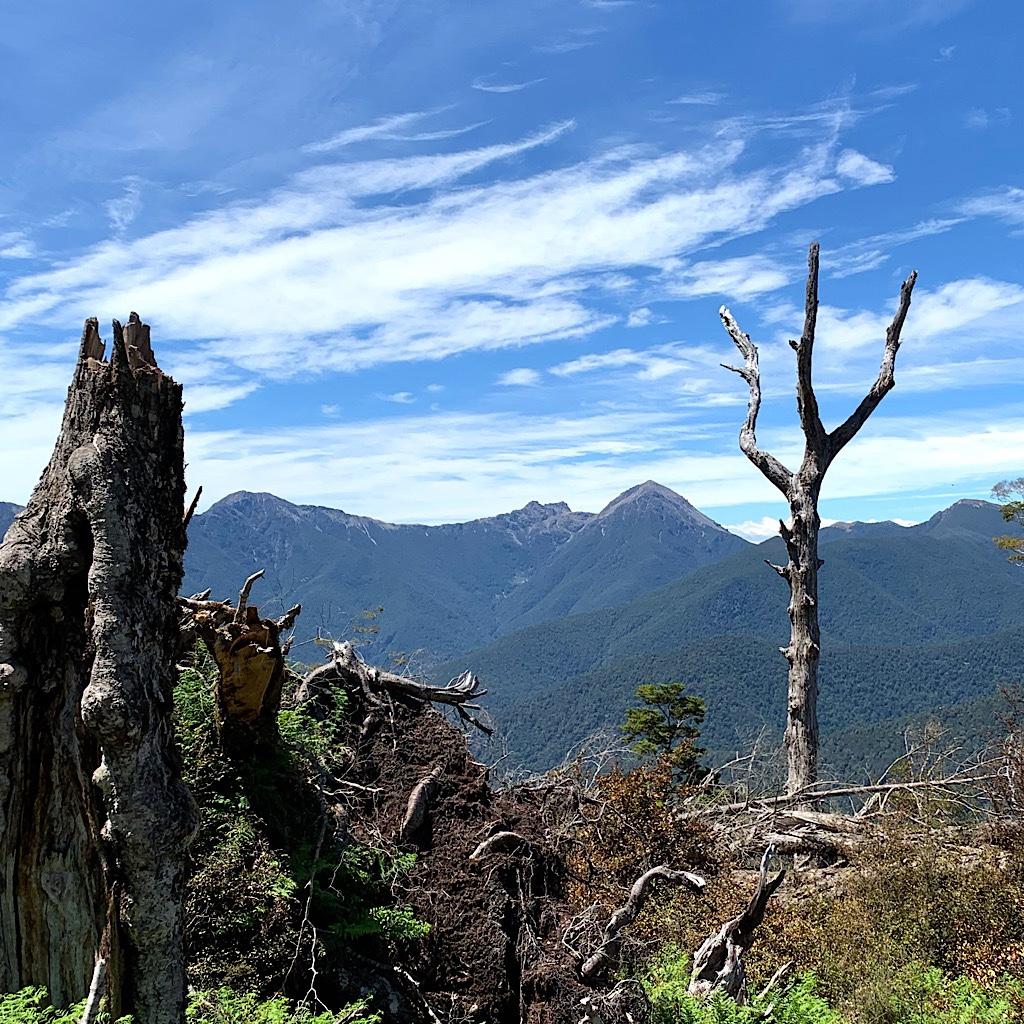 Looking towards the Richmond Range from Totara Saddle.