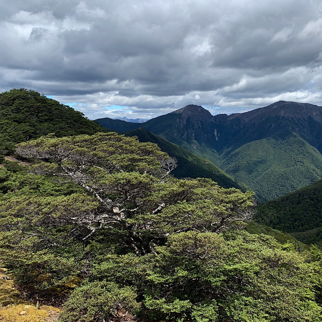 The Richmond Range is made up of steep, thickly forested mountains.