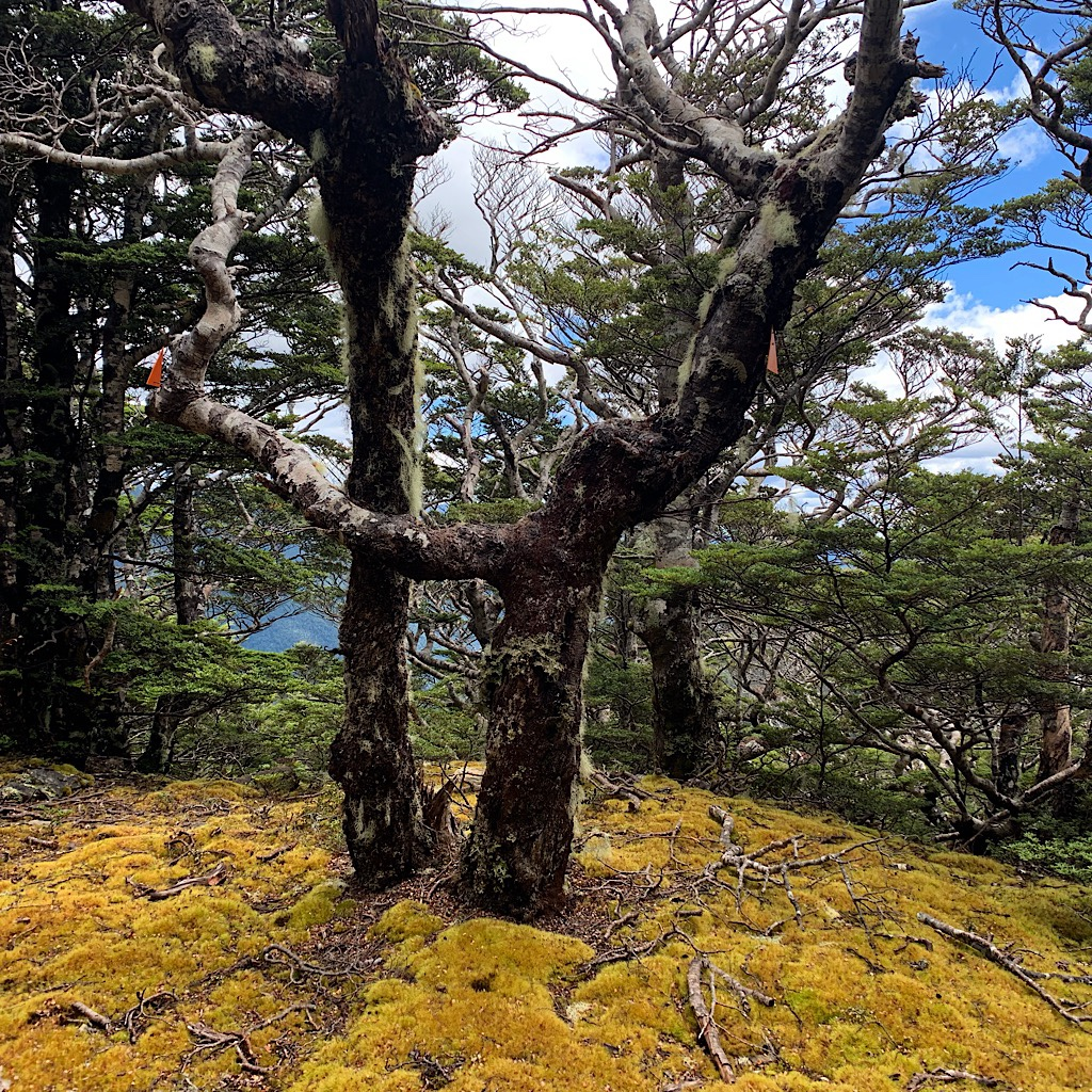 I had perfect weather, but the twisted trunks and thick moss tell a story of snow and wind.