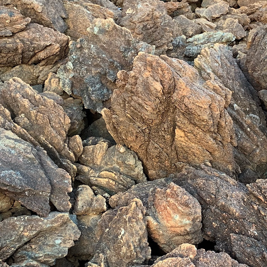 More curious rocks in the Red Hills. The magnesium-rich  soil derived is too toxic for trees.