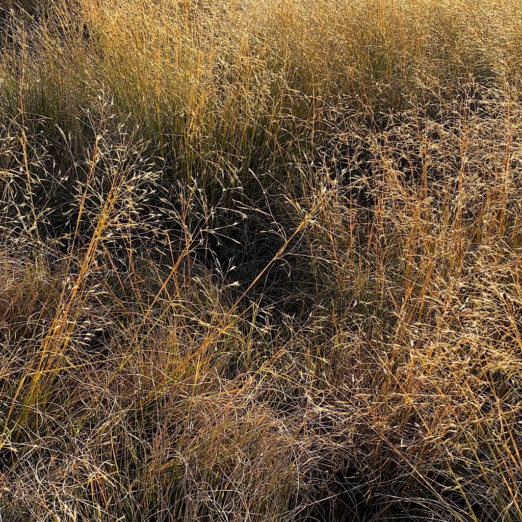 Tussocky grass that can manage living in this barren landscape.