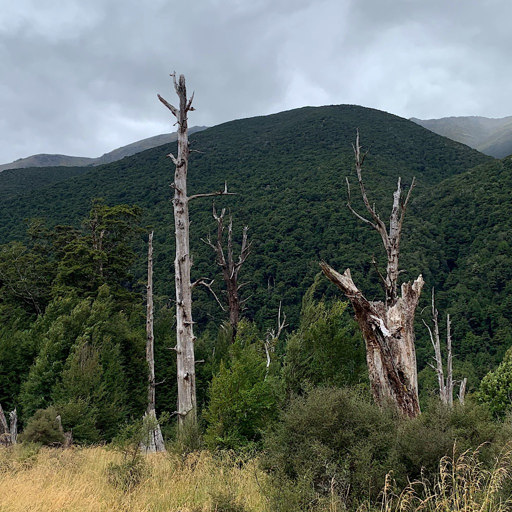 Bush-covered hills and giant sentinels gave this valley an ominous feeling.