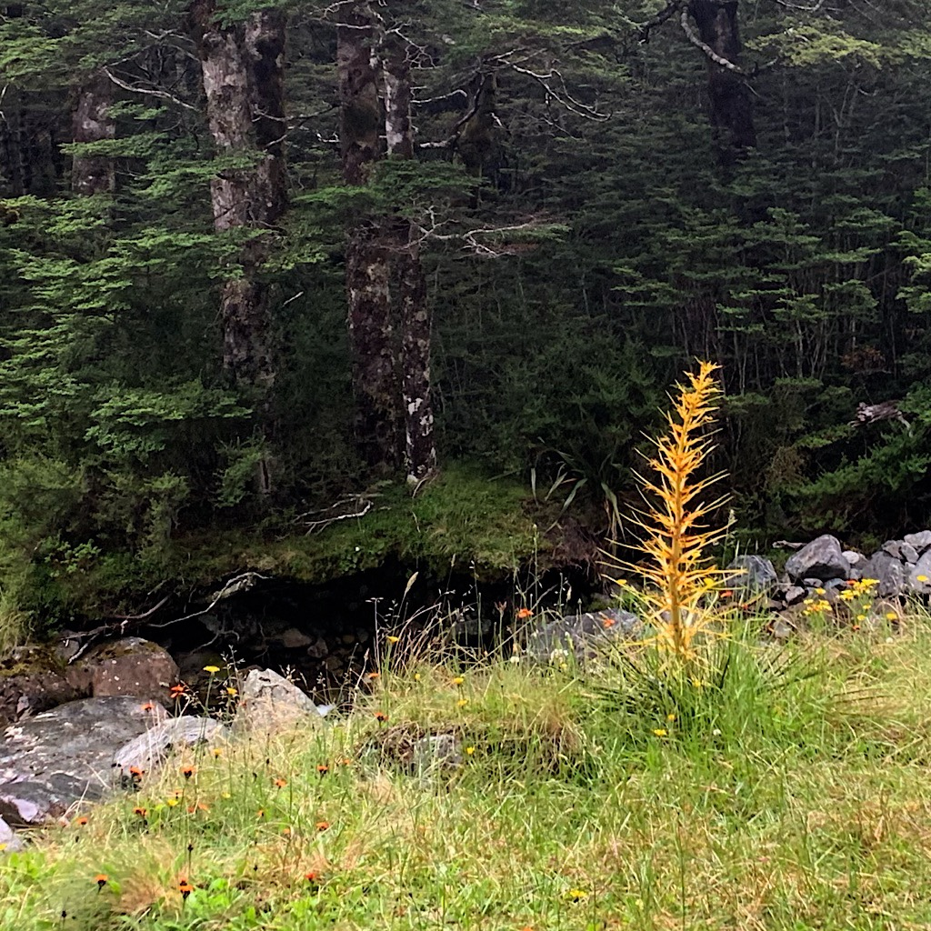 Giant spear grass seems to dance next to the river where I filled up before the final push to Upper Travers hut.