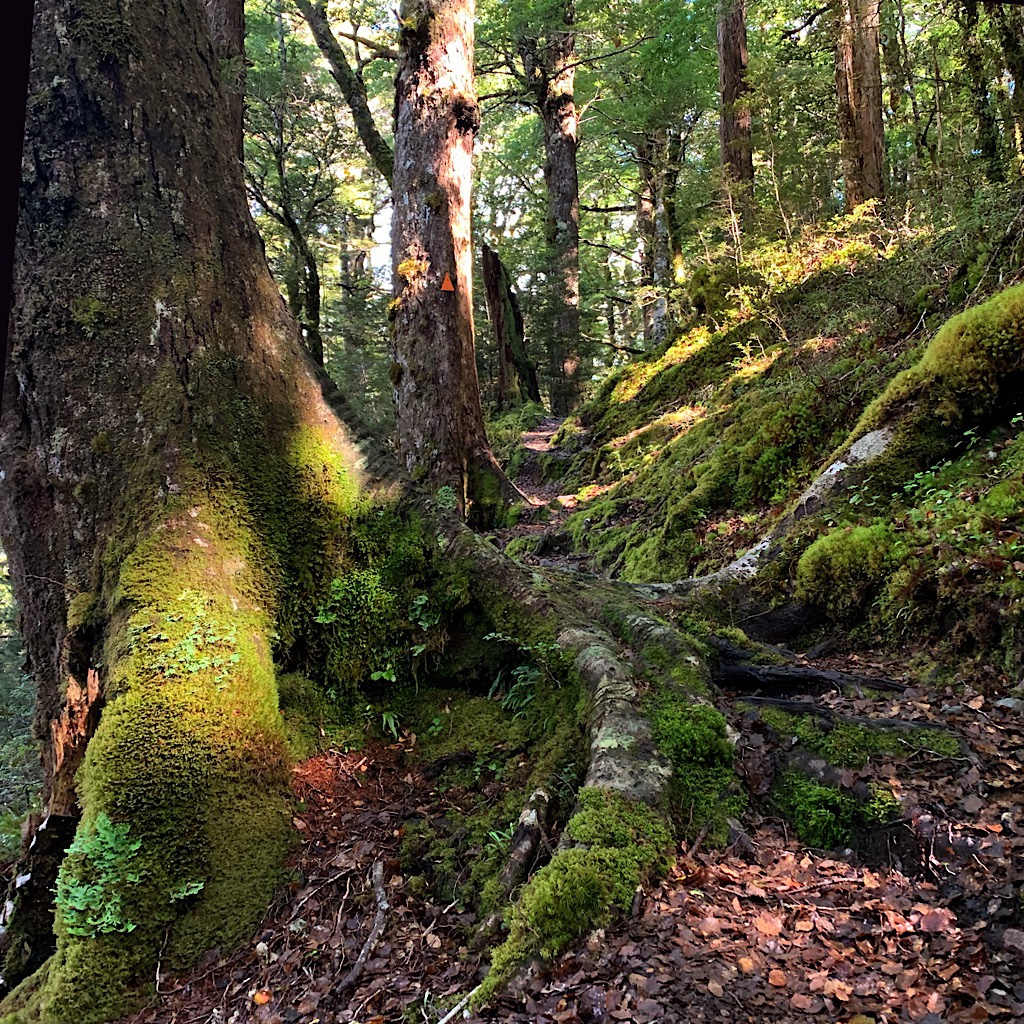 A mossy beech forest perfect for a snack and a rest.