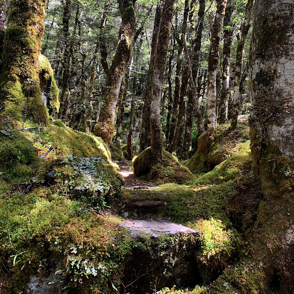A step up in the magical beech forest.
