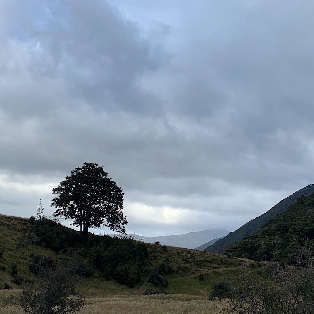 This lone tree could be seen for an hour before I arrived and walked over the small saddle.