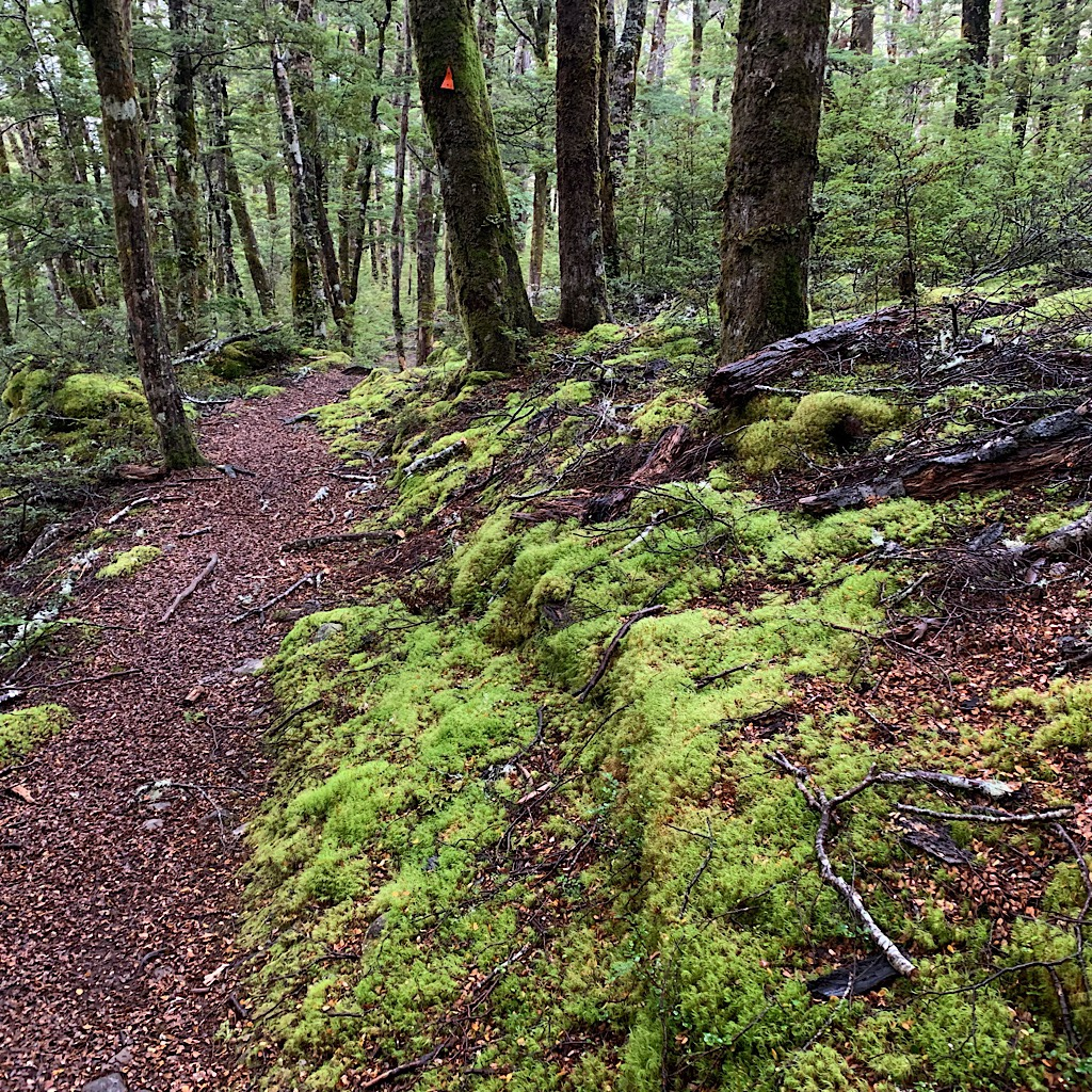 An enchanted beech forest filled with moss and a carpet of tiny leaves. An orange triangle marks the way.