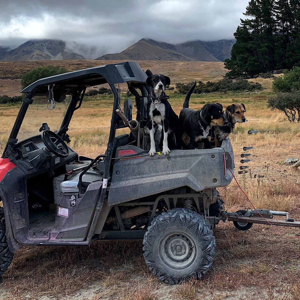 A polaris filled with working dogs. Everyone on the road was absolutely lovely to me.