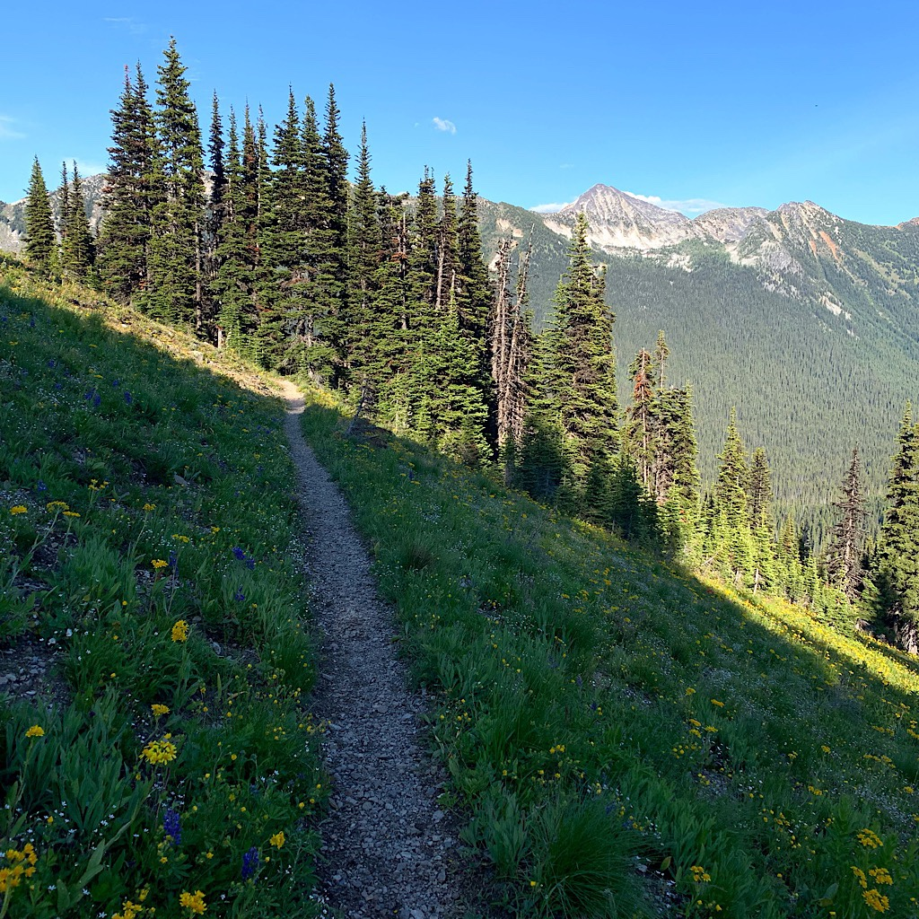 The wildflowers were extraordinary in the North Cascades.