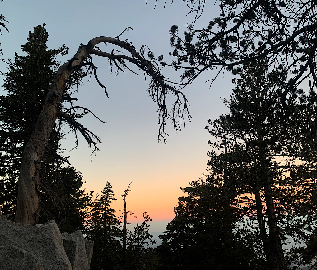 Spooky trees at the cowgirl campsite on the flanks of San Jacinto Peak.