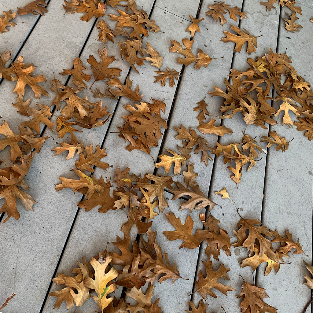 Dried oak leaves on the porch.