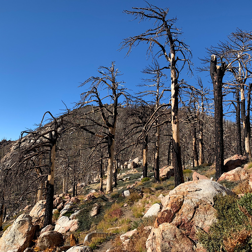 Burned carcasses stand like sentinels on the ridge.