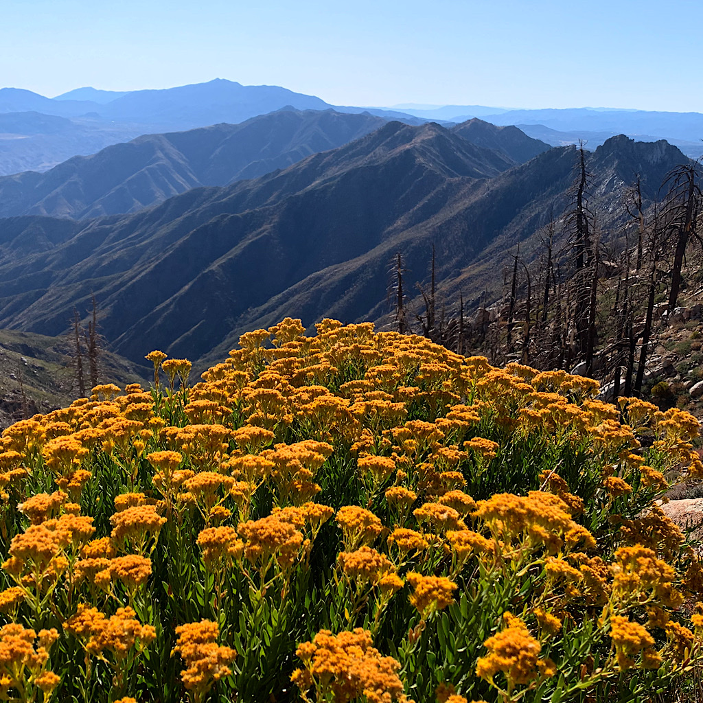 Orange flowers reach out towards steep blue mountains.