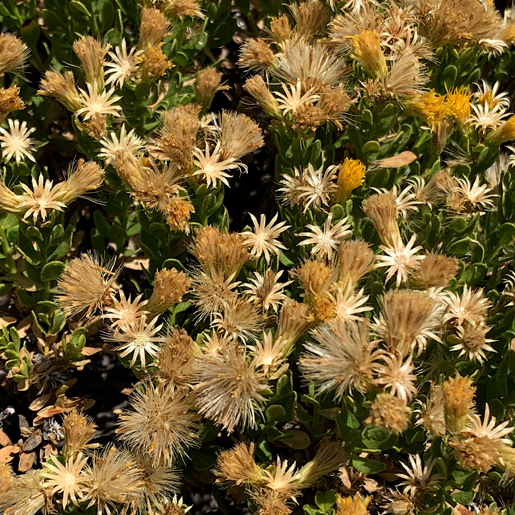 Dried flowers betray a spectacular spring past.