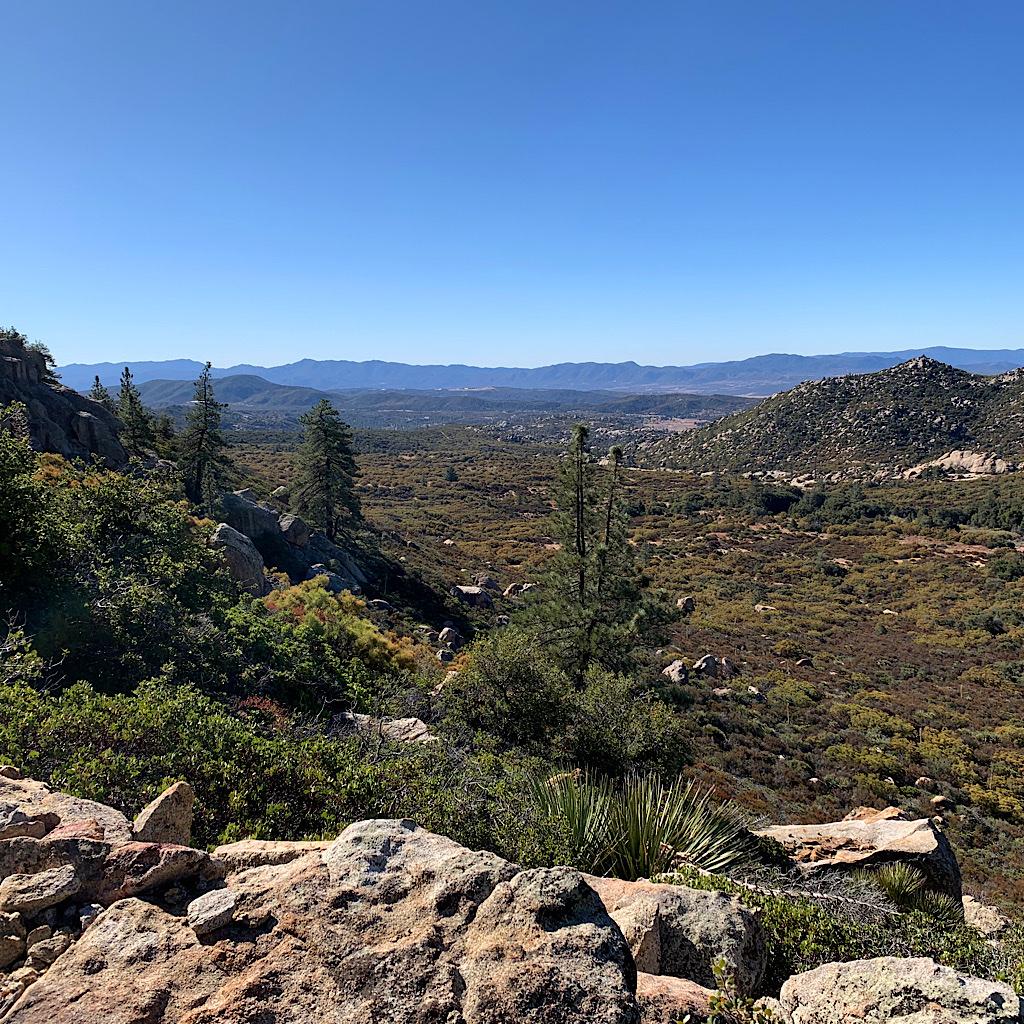 Pine trees in the High Desert.