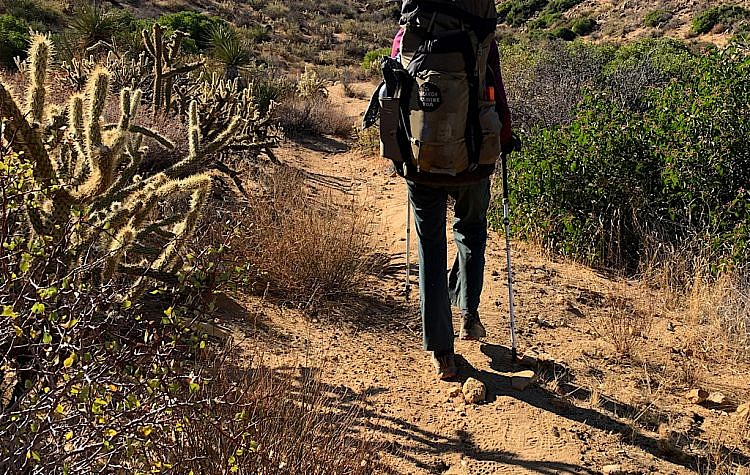 "The PCT is wide enough in the desert to avoid the ""jumping"" Cholla."