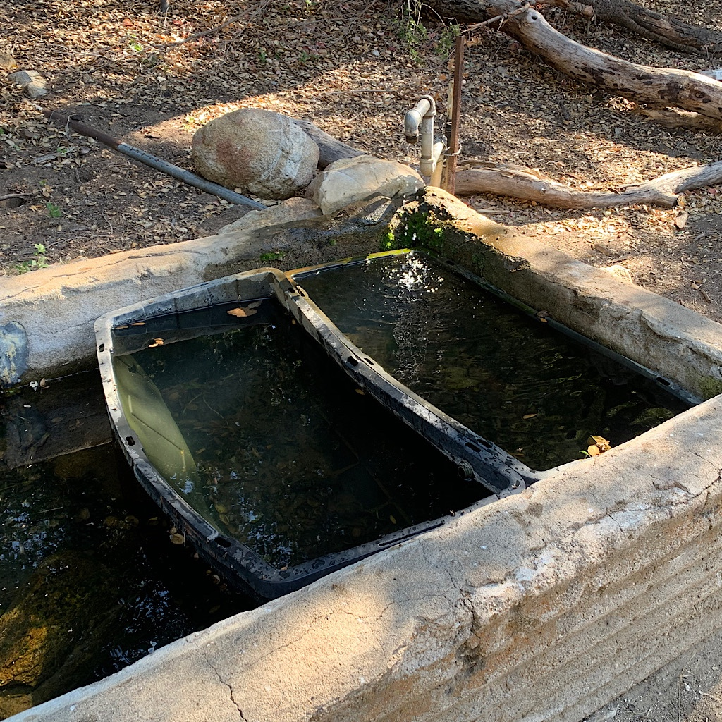 A water trough that still required purifying.