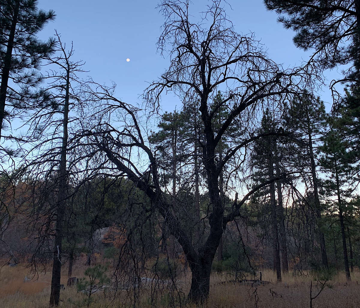 A moon setting above spooky trees on Mount Laguna.