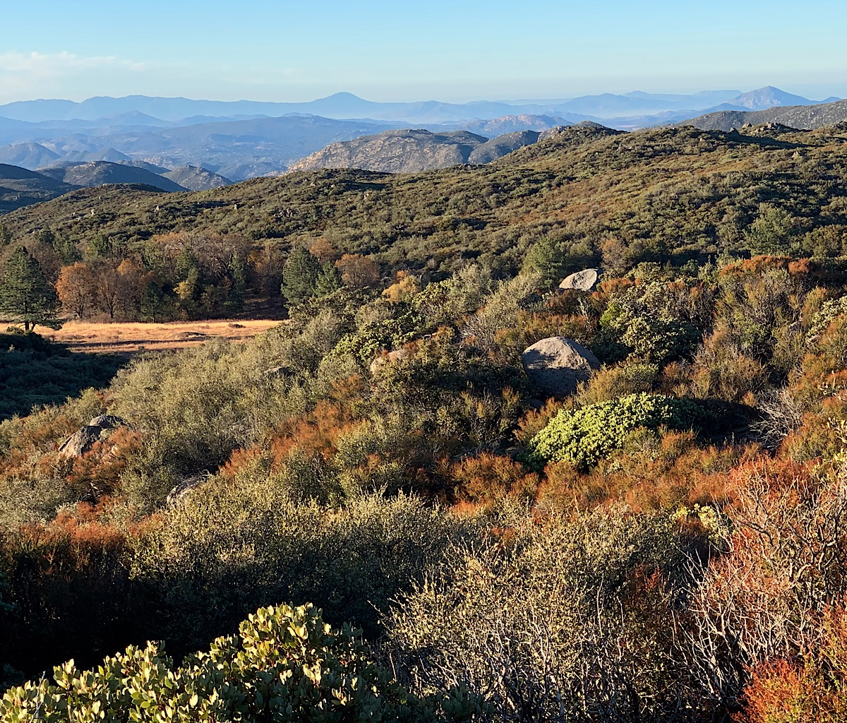 The trail leaves the forest and heads to exposed scrubland. Those distant mountains are in Mexico.