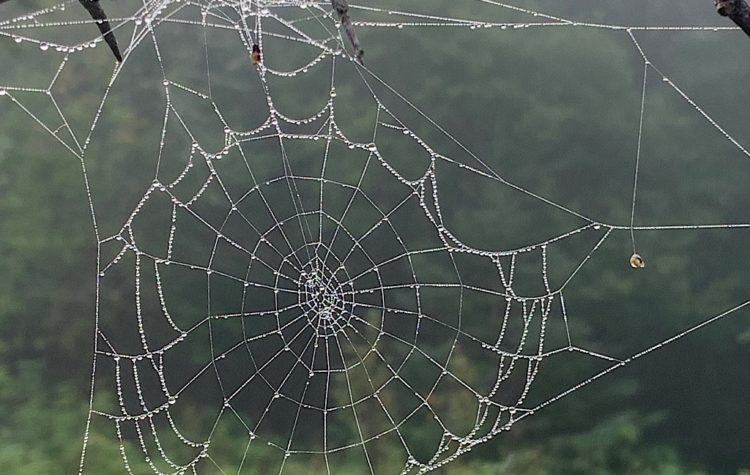 One of millions of dew covered spider webs on Feldtmann Ridge.