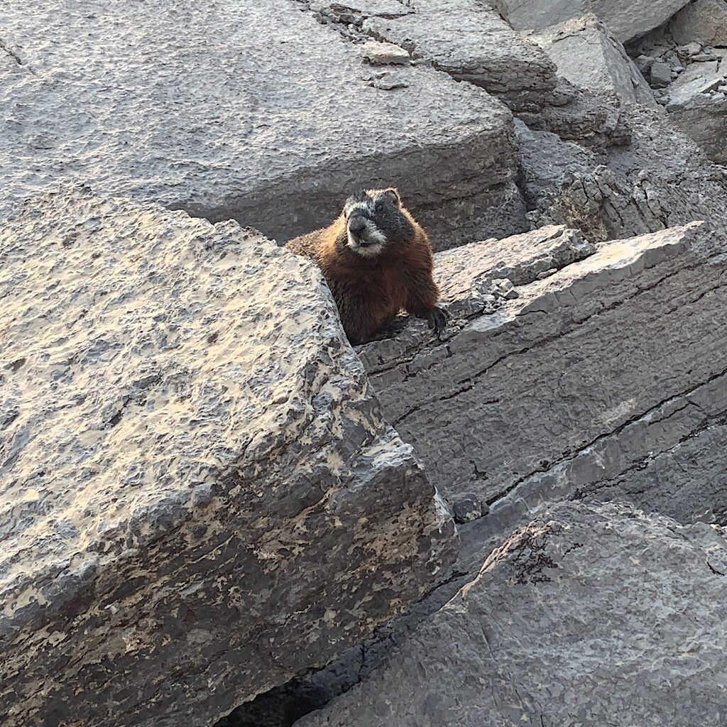 Marmot of the Mountains.