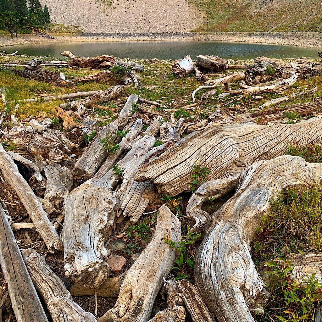 Driftwood at Ski Lake.