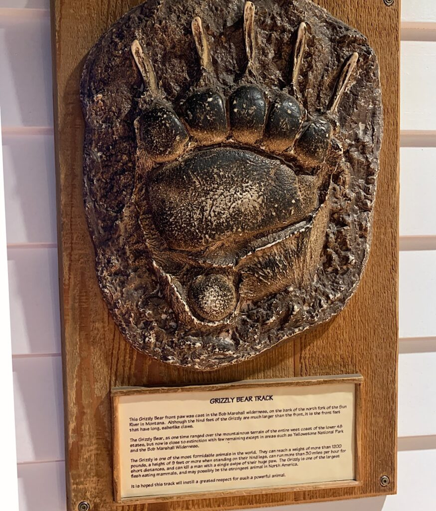 """A cast of a massive grizzly bear track from the same place I was rescued in July, the """"Bob."""""""